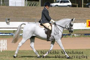 A successful workout saw 'Palmgold Desert Flyte' ridden by Shannon Parry win the Open Purebred Bridle Path Hack