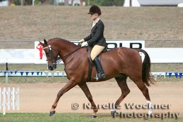 Working out to win the Open Derivative Bridle Path Hack 'Mustang Lodge Rememberance' ridden by Vanessa Lyall