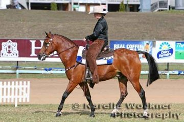 'Bracknell Bobby B' & Shannon Parry working out for a place in the Open Western Pleasure Rider any age class