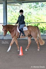 Third place getters in the Amateur Hunt Seat Equitation were Kimberley Lyons & Chips Texas Rhythm. Kimberley went on to take home the buckle for High Point Amateur of the show