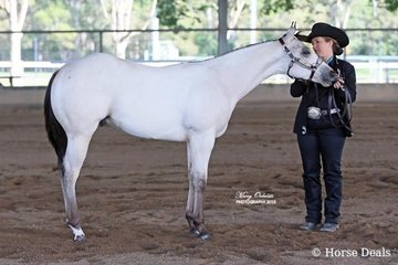 The winner of the Quarter Horse Weanling Colt class was OVS Toldya Im Phenomenal shown by Jessica Simpson
