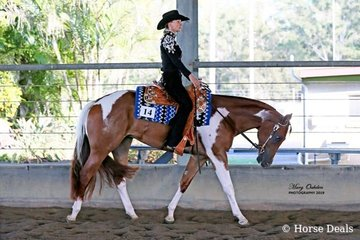 The High Point 2 Year Old buckle went to Tally S Blazing Kamper pictured here ridden by Nicole Davison