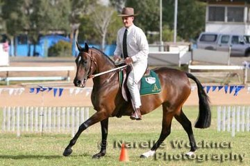 With the appearance of just coming off the property, Mark Lilley & 'Jaballa Mystic Gift' working out in the Australian Pleasure for a place