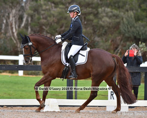 """""""Gowrie Park Cognac"""" ridden by Tamara Campain in the Elementary"""