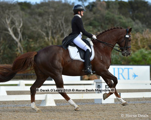 CJP Diamond Dazzler ridden by Jenny Bray in the Grand Prix, placed 5th in the Big Tour Championship