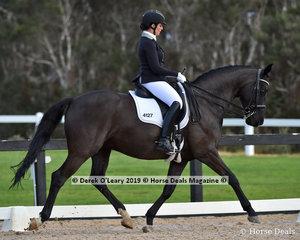 """Bloomfield Furst Glory"" ridden by Megan Cue in the Medium"