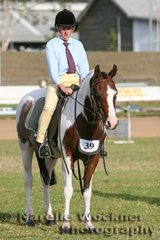 Placed 2nd in the Working Stock Horse 'Chazar Kaleidoscope' ridden by Amanda Smith