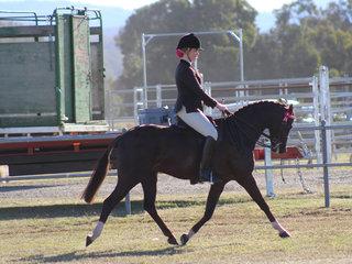 Champion Pony Hack Langtree In Vogue exhibited by Georgia Fairweather