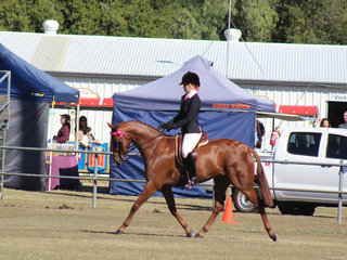 Ruby Baxter working ut for a win in the small galloway class