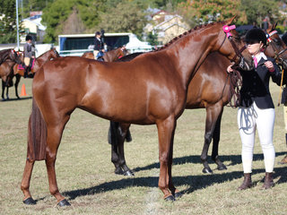 Rub Baxter and Lily's Parade winning the Riding Pony Mare class