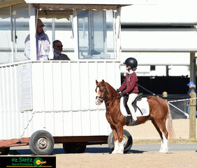 Small but mighty! Camilla Metcalfe and Dash present to the judges before their Working Hunter workout to representing St Joseph's.