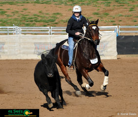 Showing everyone how it's done was Jessica Niass in the 15 to Under 17 years Campdrafting riding her horse Glenore Gilette, stable name Buddy, representing Colo High at the Interschool Horse Extravaganza 2019.