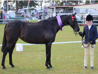 Champion Led Pony exhibited by Amelia Waller