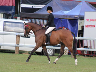 Tremayne Royal Opera exhibited by Charlee Anthony was Champion Open Galloway