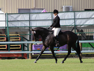 Bel Air exhibited by Carlie Taunton was the champion Ladies Hack