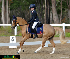 Golden pony Indi MJ shows off his canter in the Primary Preliminary dressage with rider Eloise Kings at the QLD Interschool State Championships held at Maryborough Showgrounds.