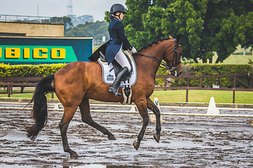 Brianna Cartwright (NSW) and Pacific Fable (Sire Celerity Park Fabulous Lad out of the mare Pacific Halo) had a sucessful morning out in the FEI Young Rider test scoring a 70.196%