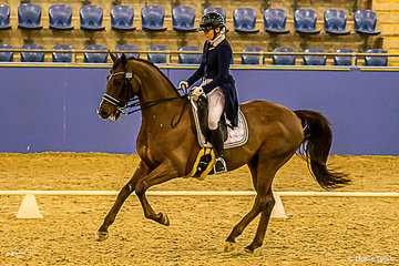 Mary Nitschke (SA) on Utopian Cardinal took out the Inttermediate II with a score of 63.382% (C=63.382%, B=63.088, H=63.676). Utopian Cardinal by Regardez Moi out of Wynella Lantarna