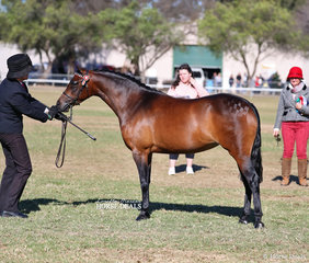 "Lori Howell with ""Jomoore China Doll"", who was the Reserve Champion Partbred APSB/APSB Riding Pony Youngstock  Exhibit."