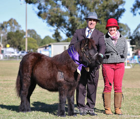 """""""Glanmort Fran"""" was Supreme Pony Foal Exhibit of the Show, exhibited by Laurie Grima - pictured with judge Jenni Cesnik."""