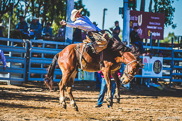 Jason Collins on Pugsly in the saddle bronc and after this round Jason is aggregate leader with a score of 147 point going into the final