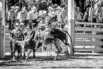 Michael Smith from Tully Far North Queensland  backing Like a Tiger with his intention to keep a leg each side, his mind in the middle and ride for 8 second. Unfortunately not successful this round, but had a round 1 score of 82.5.