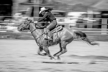 Suzie Fearon champion cowgirl from Townsville heading for home in the open women's barrels to clock up a second round time of 18.009 seconds for aggregate of 36.521 for the weekend
