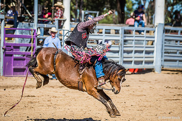 Zane Bishop from Silkwood North QLD and Show time turned it on for the crowd with a winning score for the round of 66 points
