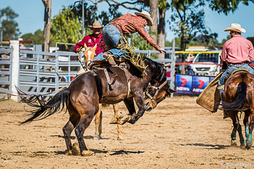 Saddle Bronc rider James Darmody From Mudge NSW on the bucking horse Copper Head Road scoring 73 points for his round 2 ride putting him into the final