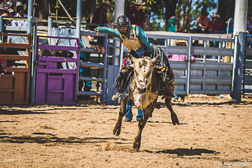 17 year old Braith Nock from Bendemeer NSW in his final junior year competing juvenile bull round 2 building a strong score of 73.  Braith went on to have a very successful weekend finishing in the prize money