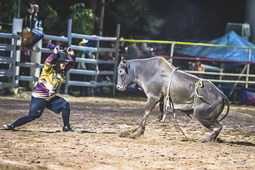 Protection athletes are the real hertos of rough riding in the rodeo world.  Here one of the protection athletes stands a bull up after it had just tossed it's rider