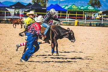 Young Levi Ward had a great ride in the Junior Steer 8-11 years round 1 coming home with a score of 68