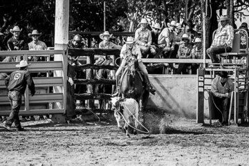 Robyn McKellar from Townsville came out of the box quickly to rope her calf in 2.025 seconds taking 1st place in the Breakaway Roping round 2
