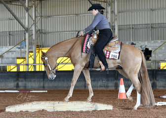 Chilled, ridden by Kate Elliott for L & S Cropp, in the 3 year old trail class.