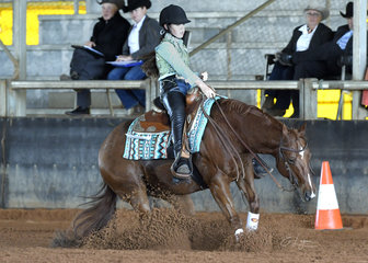 CL Walking IN Memphis ridden by Charley Lalor in the youth reining