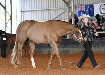 Thereisa Witheridge showing I'm Somethin Too, in the Select Amateur Showmanship