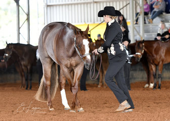 Amateur Showmanship winner Lisa Fleming with Hunk of Burnin Love