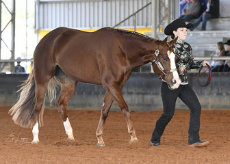 Cora Potter showing Valdemar Sweet Potential in the Youth 12-14 years shwomanship at Halter.
