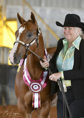 Leanne Gidman with Champion colt, and Champion Amatuer Owner colt, TCS Sheer Illusion.