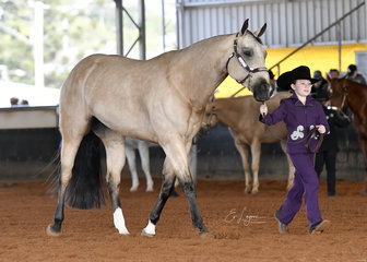 Tally S Im Your Hero shown by Grace Davison in the Youth Showmanship 5-11 years