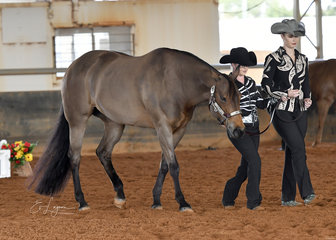 YLS Bodacious shown by Hayley and Danita Reid in the Riders With Disabilities Showmanship at Halter class.
