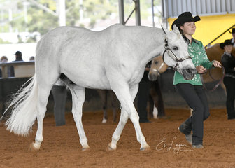 Sage Potter in the Youth Showmanship 12-14 years with Denims The Menace