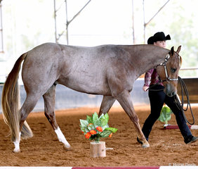 BPS Hesa Sweet Smooch shown by Sharnte Wilson in the Year old Led Trail