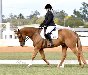 Chips Texas Rhythm ridden by Kimberley Lyons in the Amateur Dressage Preliminary 1B
