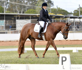 Designed By The Prophet ridden by Janet Mansley in Dressage Novice 2A