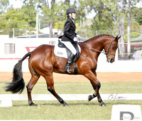 Shanna Coomber riding Gambels Lil Jagger in the Dressage Preliminary 1C