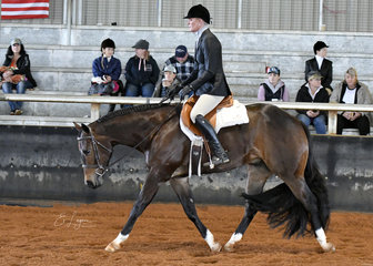 Clairveaux Hot N Sudden with Kristy Mobberley in the 3 Year Old hunter under Saddle