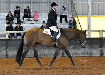 Michael Webb riding TWC Basil N Thyme in Junior Horse Hunter Under Saddle