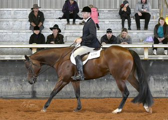 SRQ Fancy Lopin with Andrew Woirnarski in the Junior Horse Hunter Under Saddle