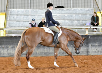 Surely Something Good ridden by Natasha Humphries in the 2 year old Hunter Under Saddle